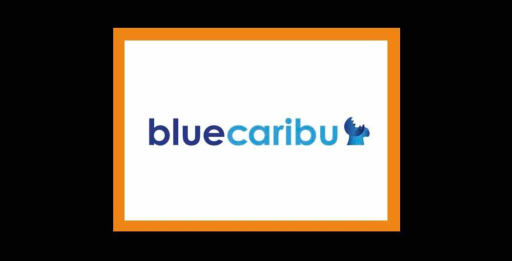 agencia seo -pzt- bluecaribu