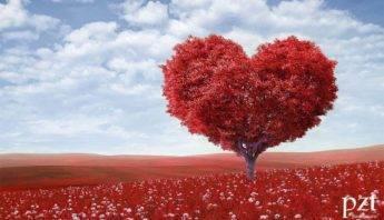 Agencia SEM - PZT - San Valentin